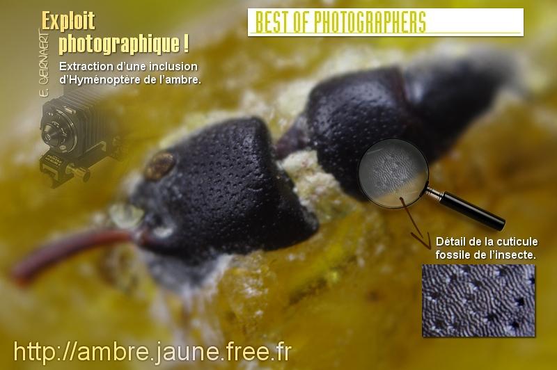 Extraction manuelle d'un hyménoptère de l'ambre. Eric G.